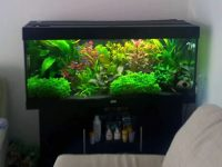20-gallon-aquarium