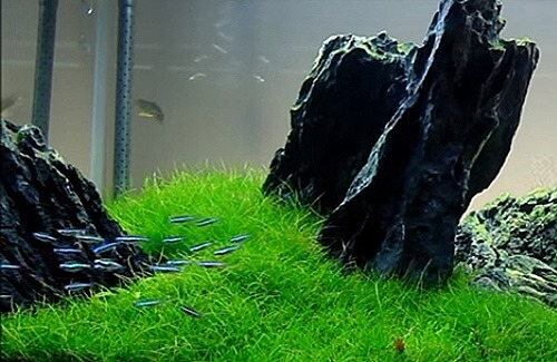Best Low Light And Easy To Care Aquarium Plants For Beginners