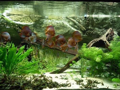 3 Methods To Own Your Unique Fish Tank Backgrounds 2020