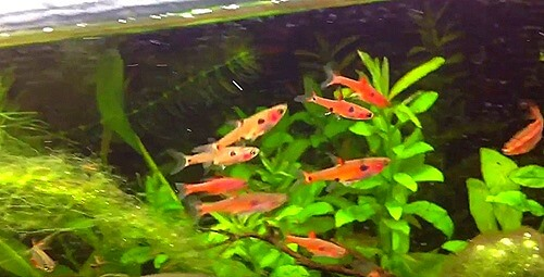 10 gallon aquarium fish stocking ideas best fish and for Best community fish