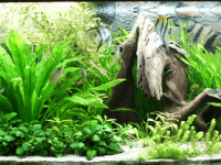 planted aquarium led light