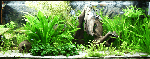 how to make aquarium plants grow faster