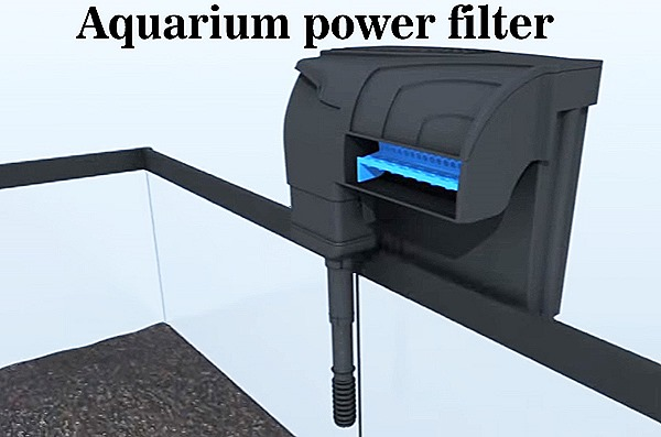 Best types of aquarium filters for small to large fish Types of aquarium filters