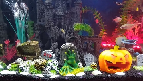 Spooky halloween aquarium decorations and setup guide for Halloween fish tank decorations