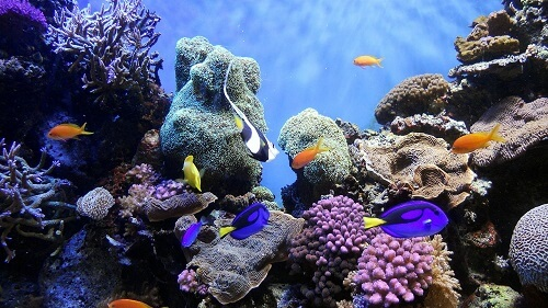 coral-reef-system-under-sea