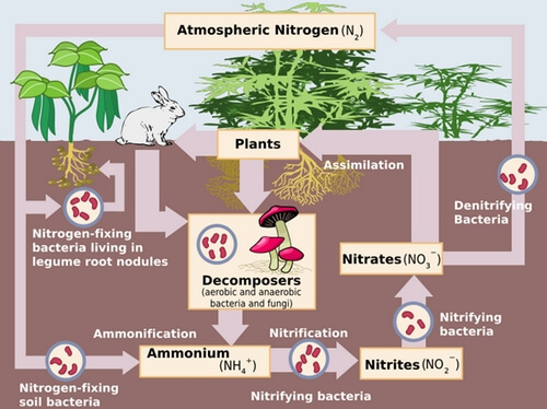 nitrogen-cycle-in-nature