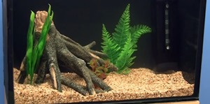 set-up-freshwater-fish-tank-(3)