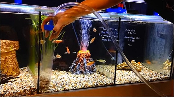 How do you set up adequate filtration for a fish tank?