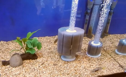 image of best small aquarium filter