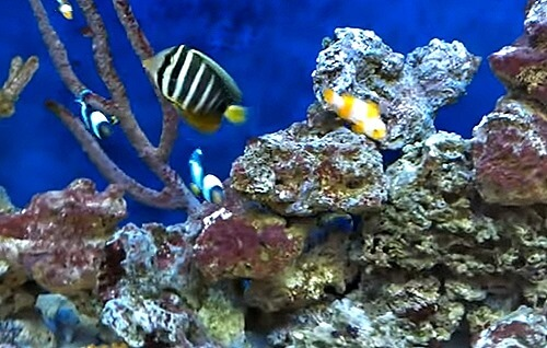 saltwater-tank-with-live-rock