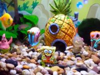 spongebob-fish-tank-theme