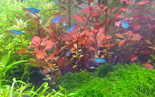 how-to-clear-green-aquarium-water-1