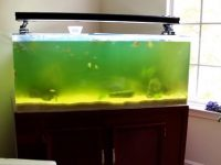 how-to-clear-green-aquarium-water.jpg