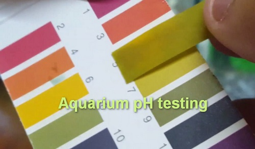 How and when to test aquarium pH – test kit, strip, meter to use