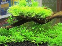substrate-for-planted-tank.jpg
