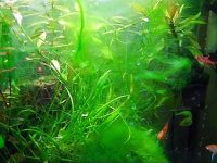 6 Causes Of Algae Bloom In A Planted Aquarium And How To