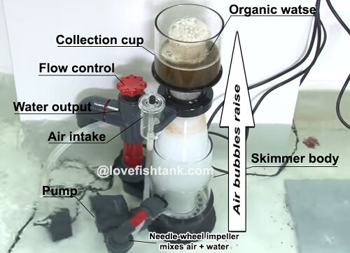 how-protein-skimmer-work