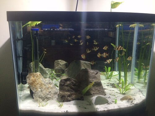 30-gallon-fish-tank