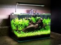 5-gallon-fish-tank