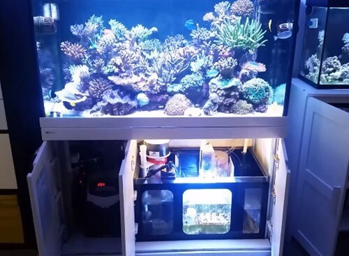 A reef aquarium with sump