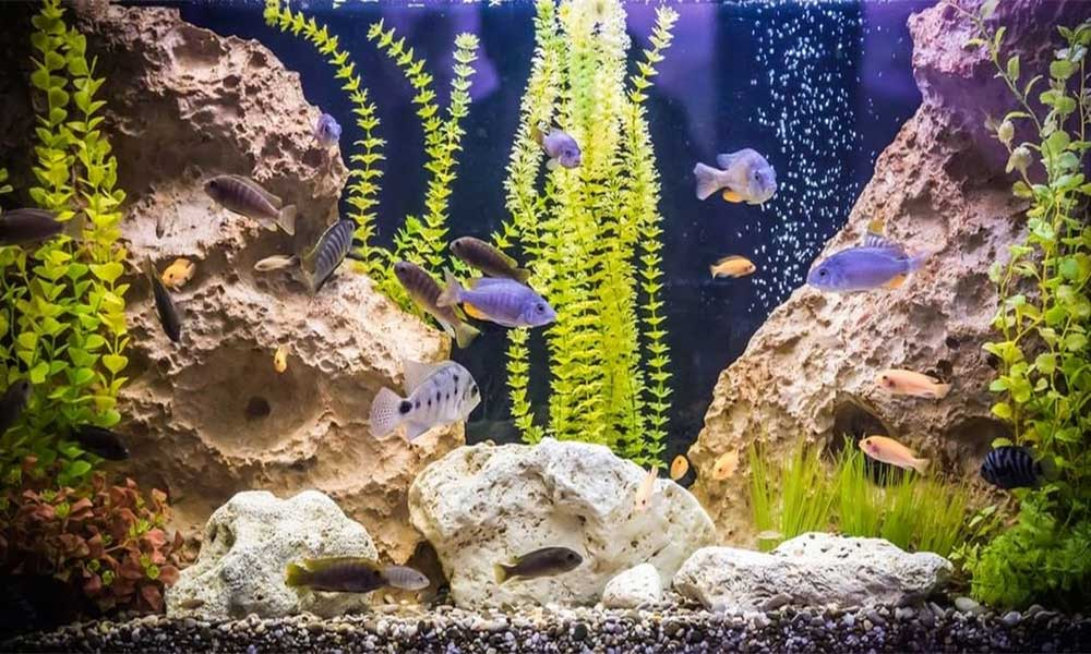 Rocks-For-Freshwater-Aquariums