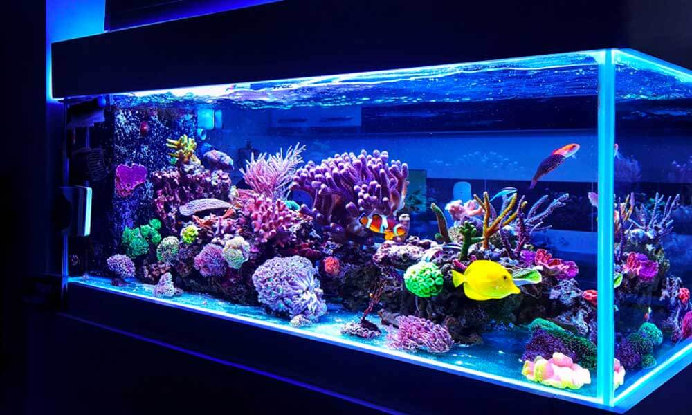 gorgeous tank with water and fish illuminated with led lights