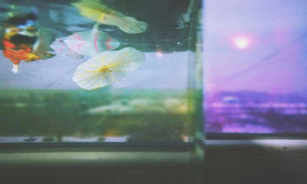 bloom-aquarium-ft-img