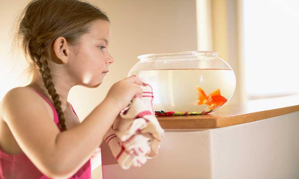cleaning-aquarium-glass