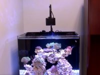 led-light-for-reef-tank