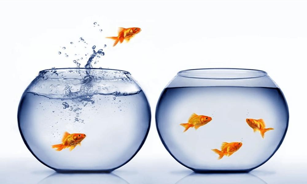 moving-fish-tank
